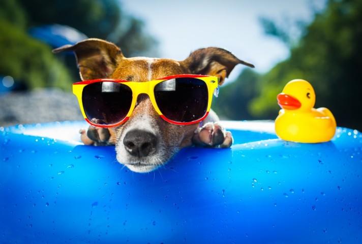 mascotas verano